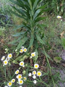 GardenBlog8